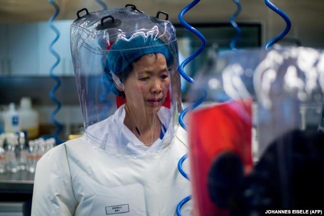 Китайский биолог Ши Дженли, которая вела исследования коронавирусов, в том числе на улучшение их свойств