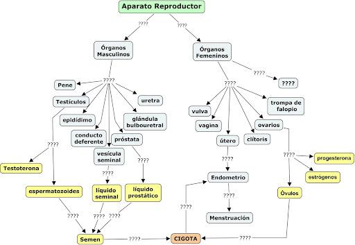 Mapas Conceptuales sobre Aparato Reproductor NF4i6BMX79LA2p4SxUDqk4jXcWT31xN-u9mgxQeIJ59ckuc639I8zR1JlbgudnPjhxeoEKVZpbGzCjOlSrsc_KKQyw=s512
