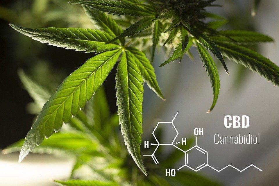 Leaves, Cannabis, Plant, Herbal, Medicine, Cbd