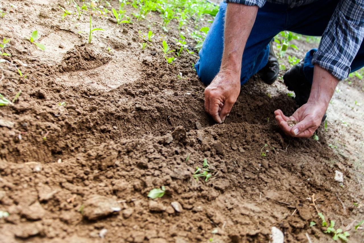 Algumas linhas permitem que parte do crédito seja usada para sustento da família (Fonte: Unsplash)homem plantando semente