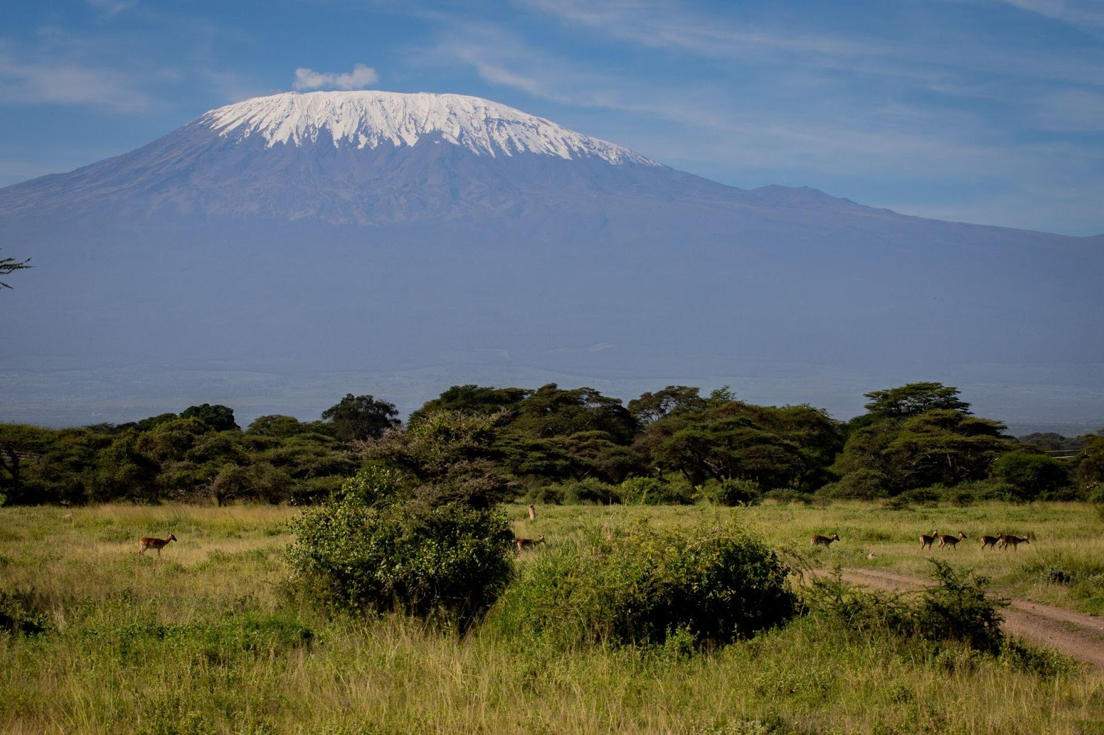 Kilimanjaro Bush Camp - photo by Ryan Frederick Wiramidjaja