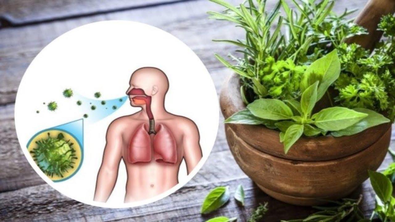 Lung Detox Regiment You Should Implement