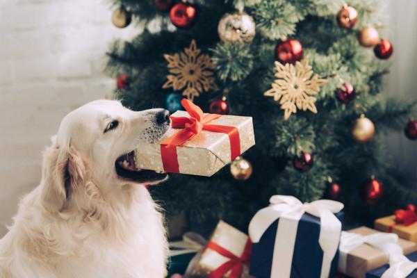 ᐈ Новый год собаки рисунки, фото собака новый год | скачать на  Depositphotos®