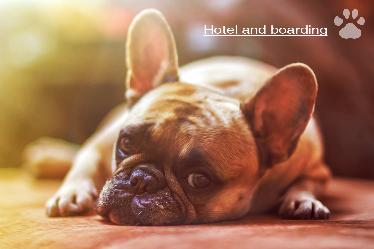 hotel and boarding