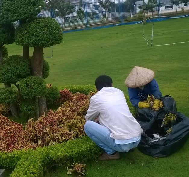 Chăm sóc sau khi trồng cũng cần đặc biệt lưu ý