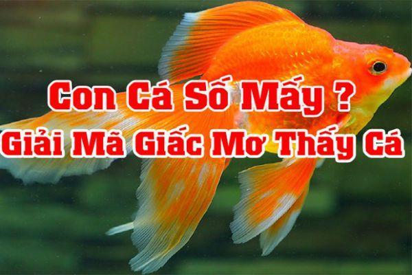 Nằm mơ thấy cá là điềm báo tốt hay xấu? Đánh con gì số mấy