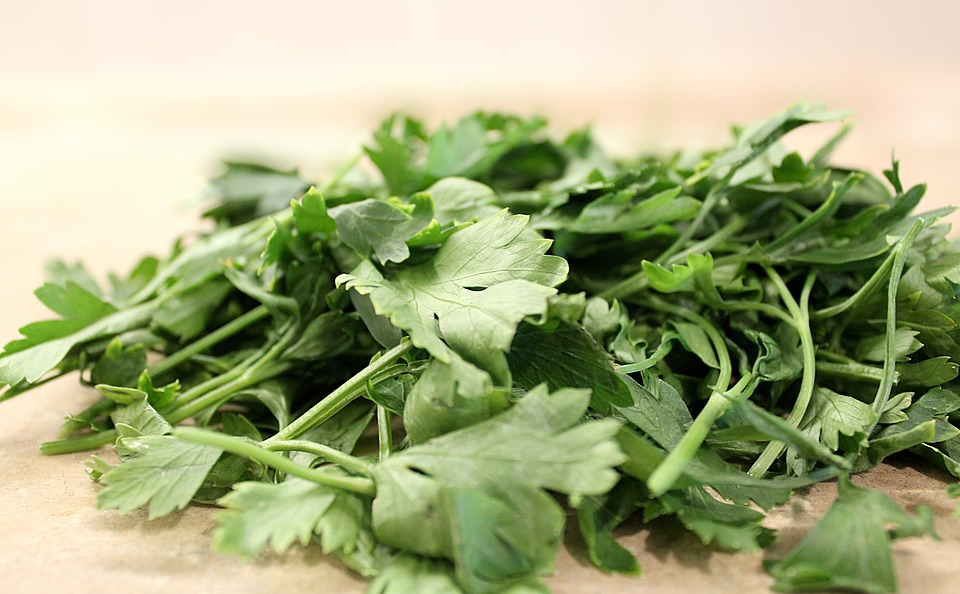 sow parsley