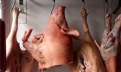 pigs_head460.jpg