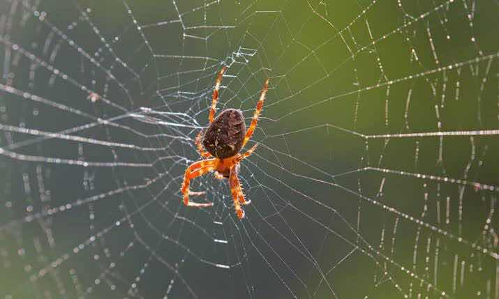 spider and life, psychotherapist Manila, psychologist philippines, online therapy counseling life coaching, marital therapy counseling life coaching, parent child family therapy counseling life coaching
