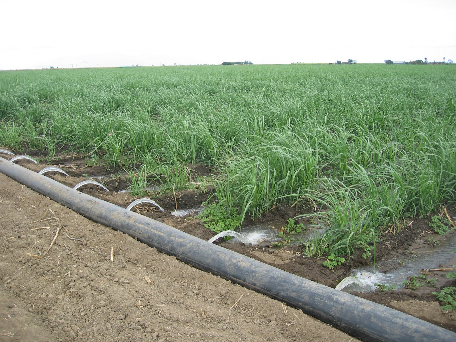 Águas de reuso podem ser muito úteis para a irrigação (Fonte: Wikimedia Commons)
