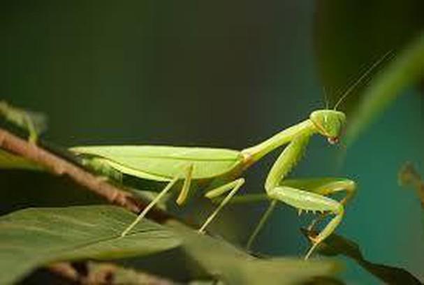 Diễn đàn rao vặt tổng hợp: Những loài côn trùng có ích bà con nông dân nên biết Nc8mWwSoE3qxLWNkqusLJjomyqSpkjzs3qoJ02e-RMaQyQ0D5V-dhKwVKQPr41OtigQ-AtGBvmMu2znVhcWGZFWOX4D98UouiVn-HV0NpAQOfAu0DJUC_Lrlatc0VxodUOERWNZx