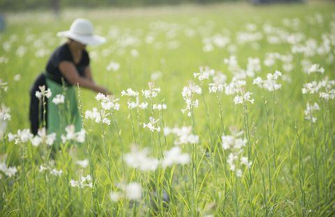 ความพิเศษของดอกมะลิใน Gabrielle Essence - CHANEL 02