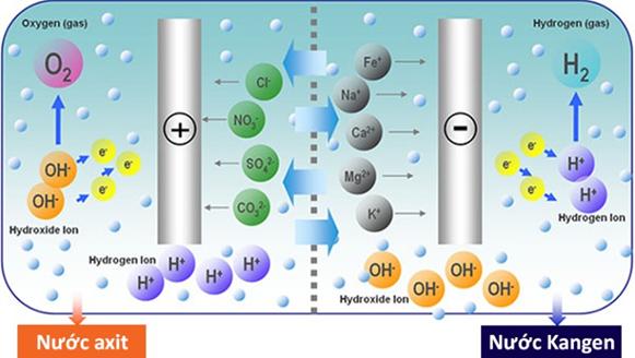 Nguyên lý điện giải nước trong khoang điện phân của máy lọc nước Kangen