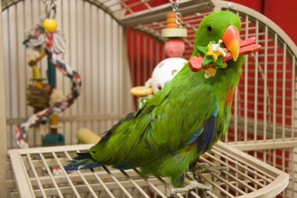 What to Consider When Buying a Parrot Cage - Size, Placement and ...