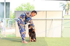 Kết quả hình ảnh cho huấn luyện chó toànphát