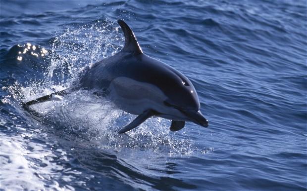 dolphin_2863477b.jpg