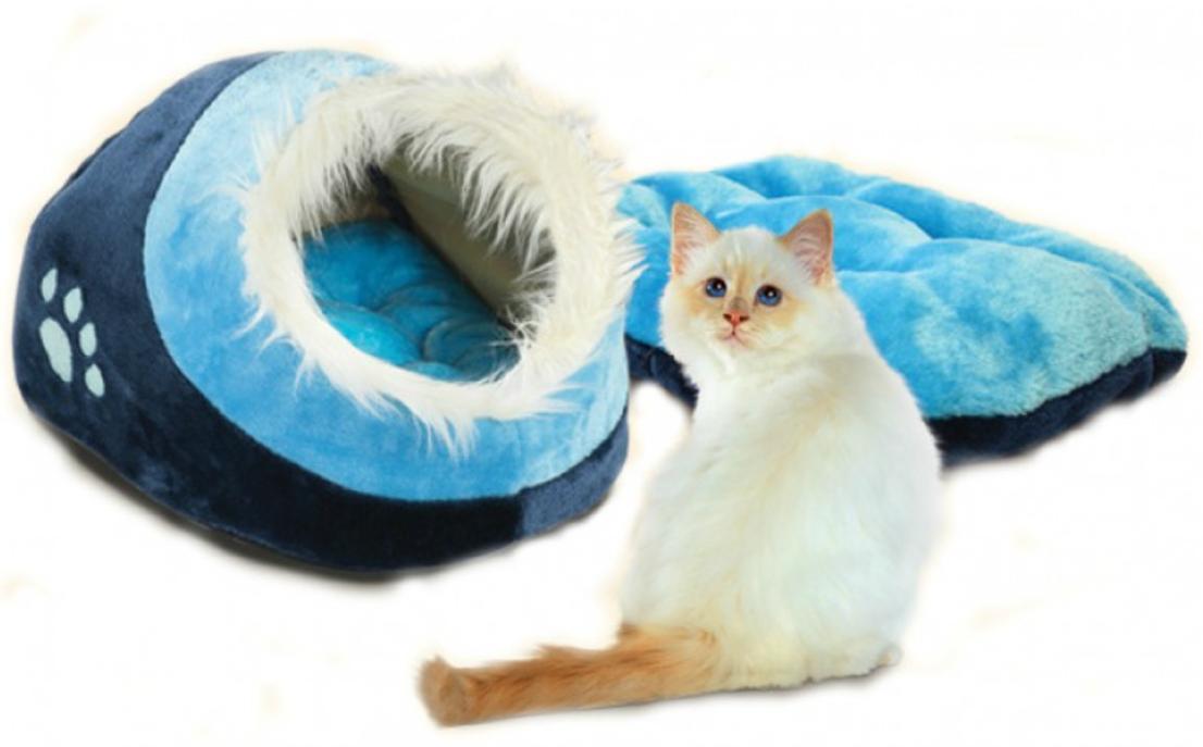 Εικόνα που περιέχει γάτα, μπλε, θηλαστικό, λευκό  Περιγραφή που δημιουργήθηκε αυτόματα