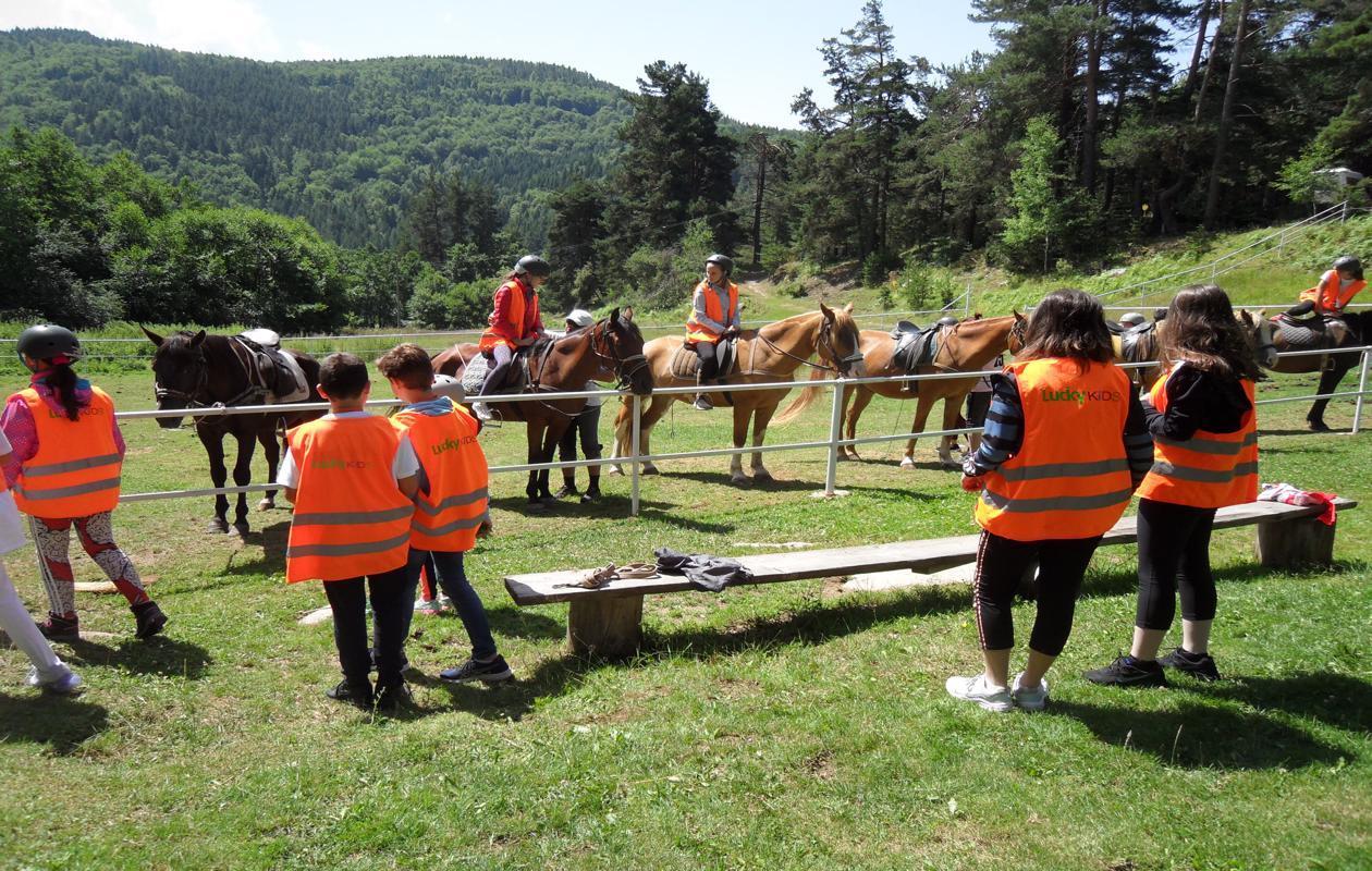 Horse-Base-3-1260x800-1[1]