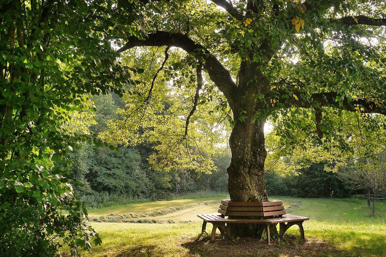беседка под деревом