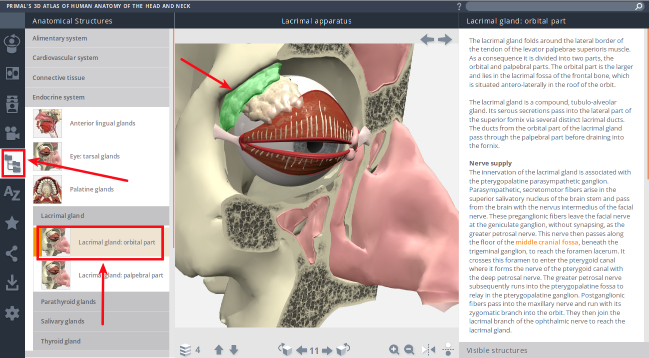 Primal's 3D Atlas of Human Anatomy of the Head and Neck - Mozilla Firefox_065.png