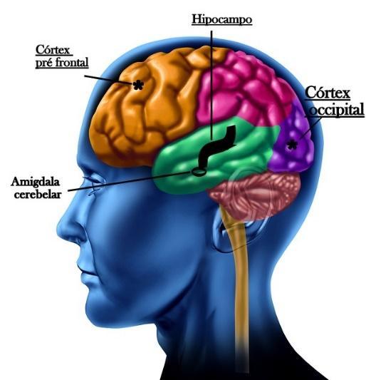 Resultado de imagem para cortex pré frontal