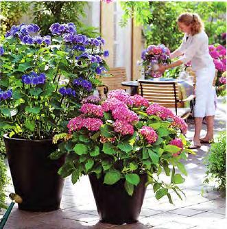 Какие цветы посадить на балконе, цветы на балконе, цветок на балконе