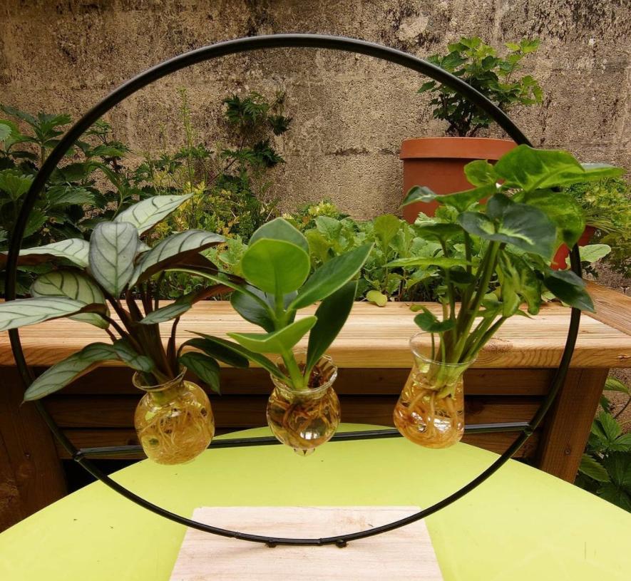 hydroponic garden in little jars