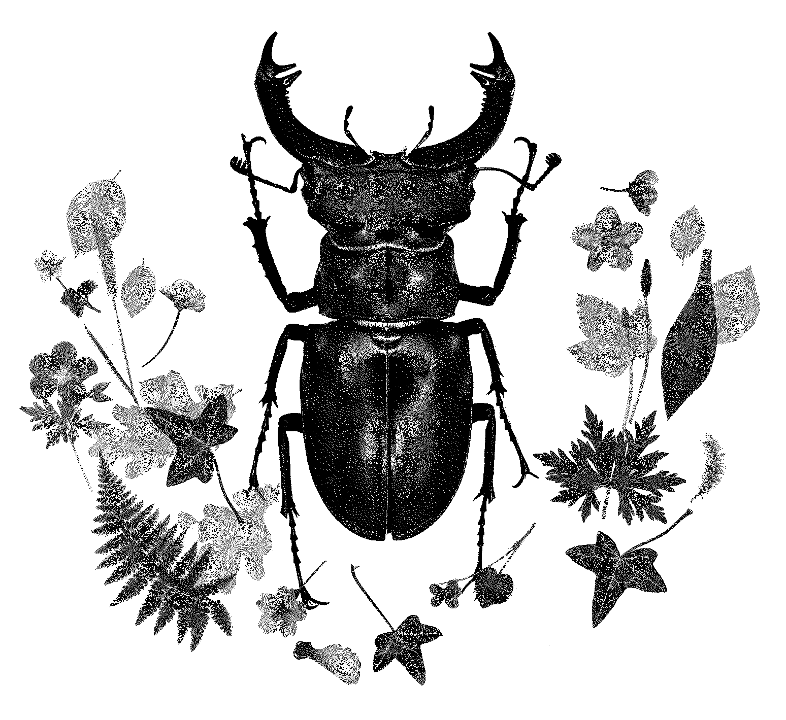 Artwork with a stag beetle and leaves, in black and white.