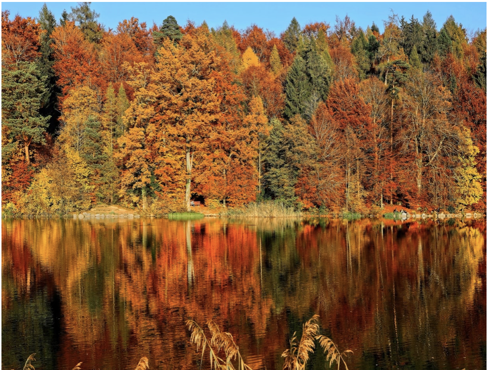 canadian autumn coloured forest reflecting in lake