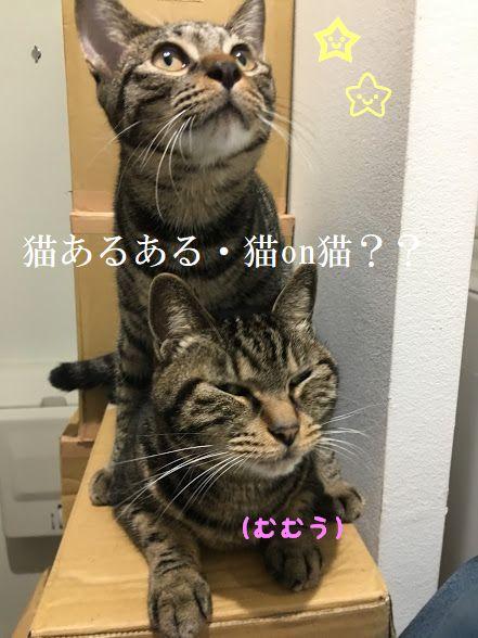 猫あるある?「なにかに乗る」猫たち