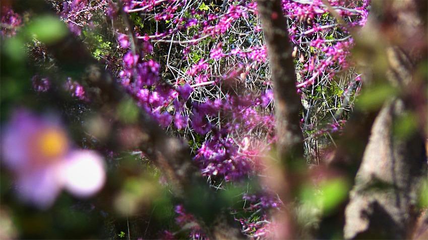 A Look Into Spring_Fotor.jpg