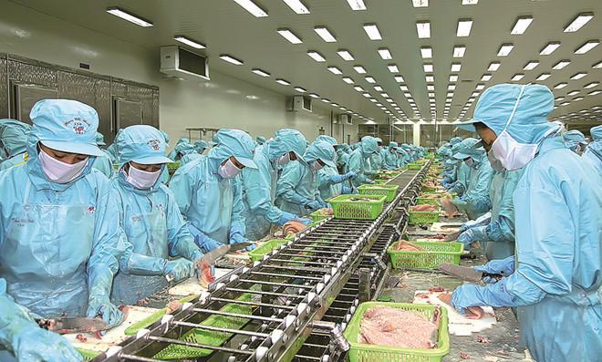công nhân sản xuất tại nhà máy IDI