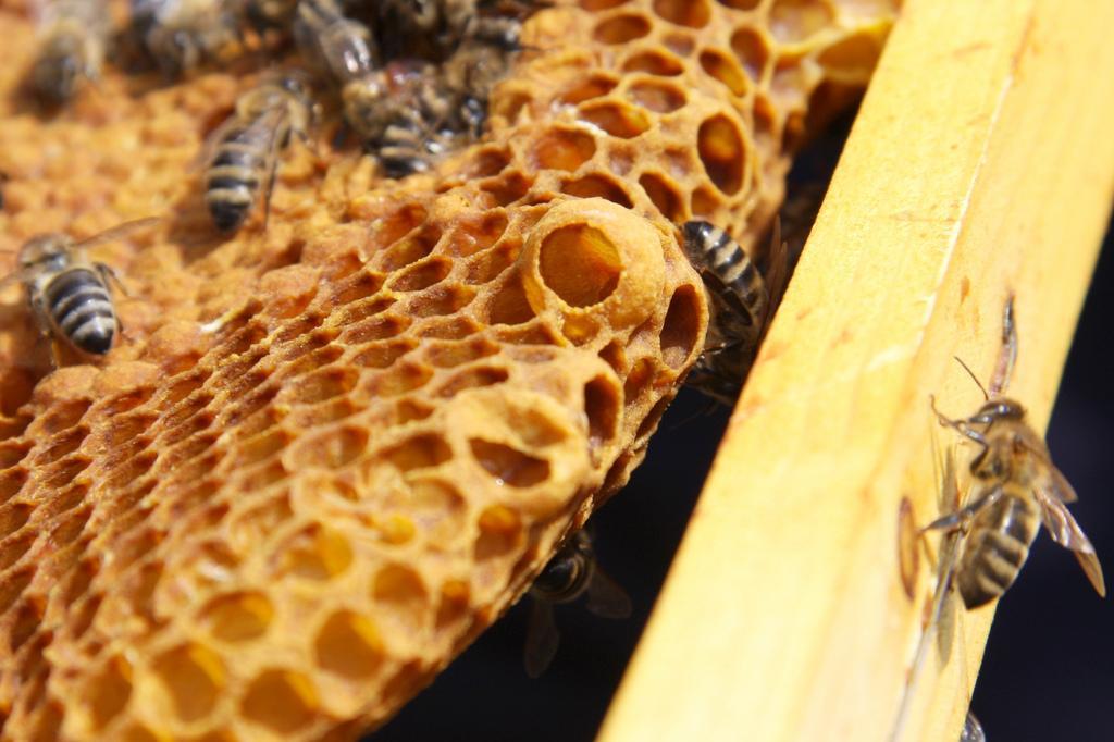 http://www.honeybeesuite.com/wp-content/uploads/2010/05/4583832484_4d8d54298c_b1.jpg