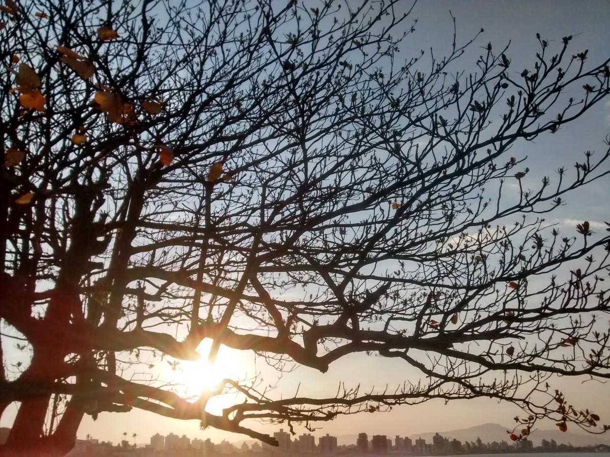 panorama árvore natureza ramo neve inverno plantar céu Por do sol luz solar manhã folha flor alvorecer tarde crepúsculo outono estação Tarde Fim da tarde Fenômeno atmosférico Planta lenhosa Forte samir Eder fl vio mauro