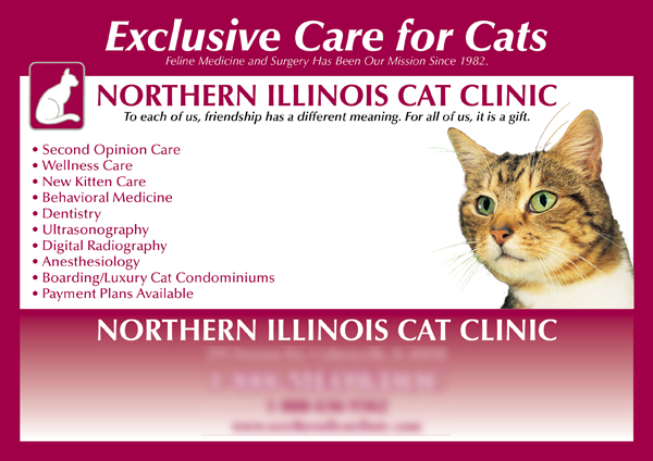 Cat care postcard generated 30 clients per week
