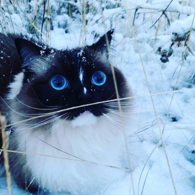 Divertidas reacciones de mascotas al ver la nieve por primera vez