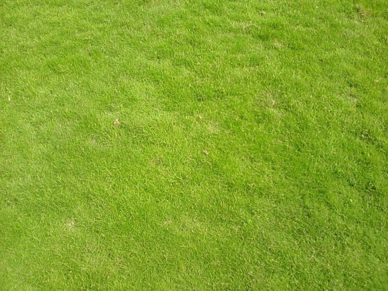 Dịch vụ trồng cỏ ở Tây Ninh chất lượng tốt