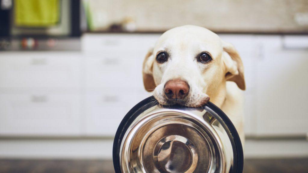 alimentos_prohibidos_para_perros