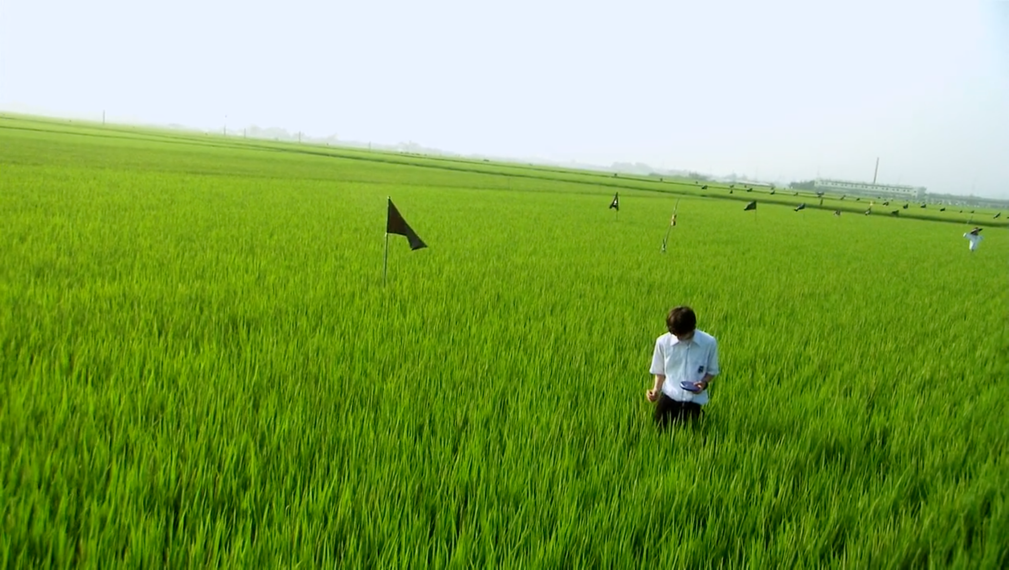Yūichi, in his school uniform of white shirt and black pants, stands in a vast green rice field with a CD player in one hand.