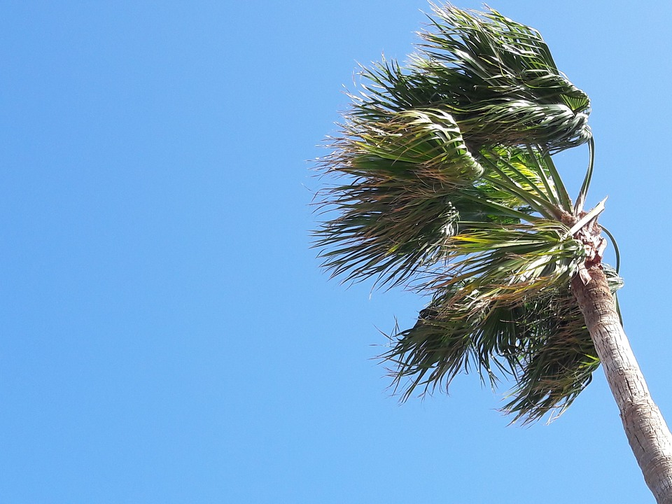 Palm-Tree-Sky-Movement-Spain-Canary-Islands-Wind-2130376.jpg