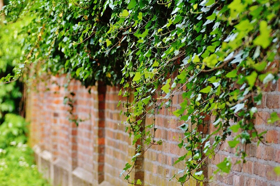 wall-1453158_960_720.jpg