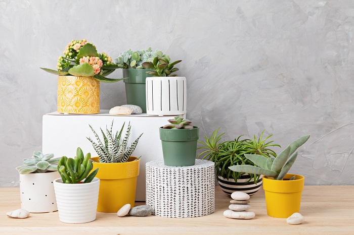 Cacti and succulents in colorful pots with rocks