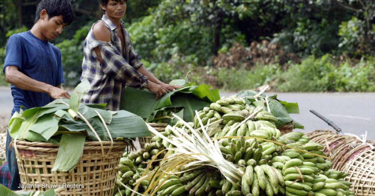 Keeping Indigenous food practices alive