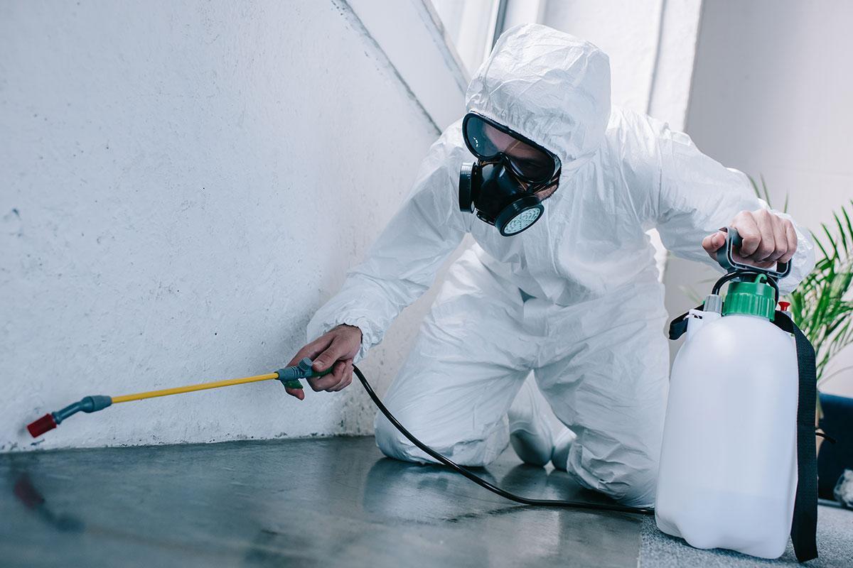 Do organic pest control services actually work?