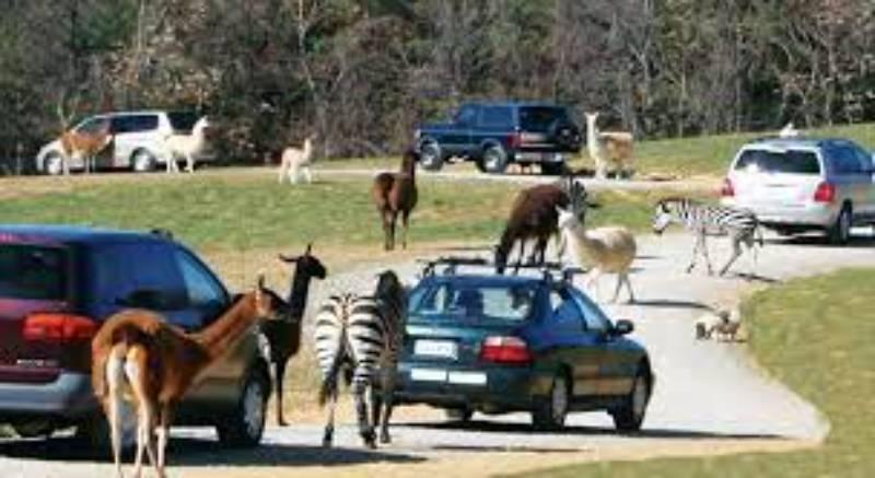 Alabama Safari Park