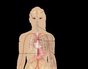 Symptoms of nicotine poisoning