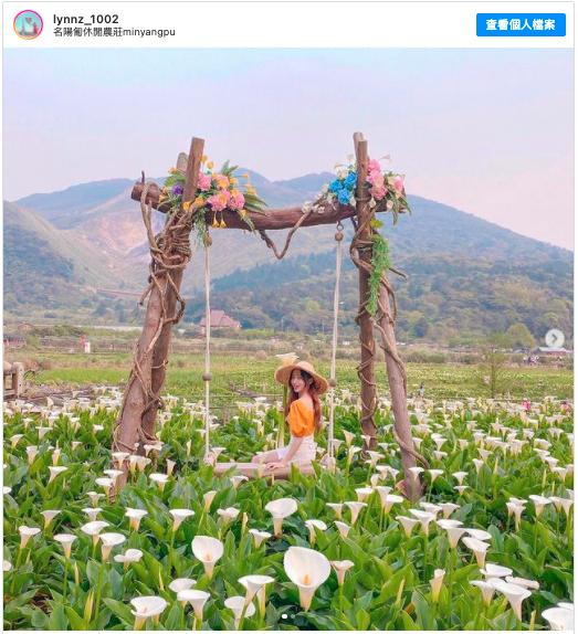 2021陽明山賞花 採海芋 推薦:名陽匍休閒農莊,包含交通方式、開放時間