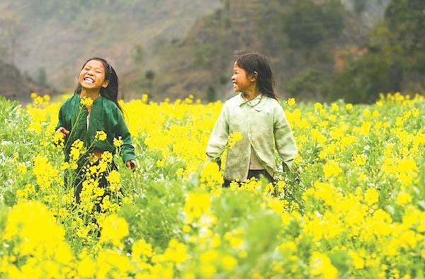 Cải vàng trổ hoa tươi thắm như nụ cười của những cô bé ngây thơ và hồn nhiên
