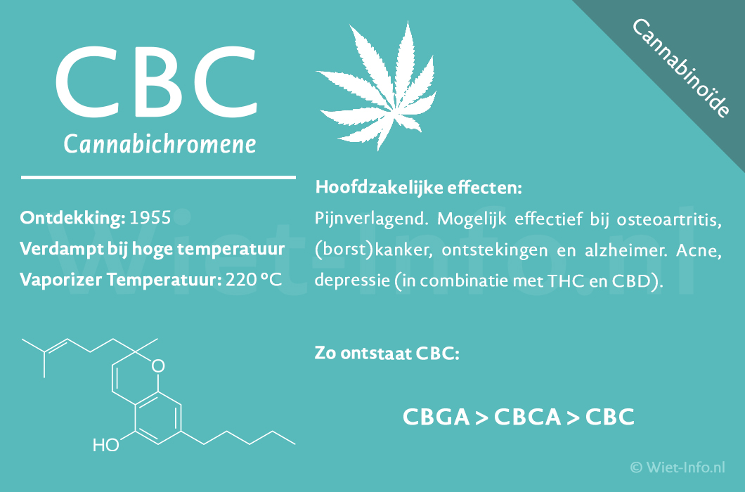 CBC factsheet