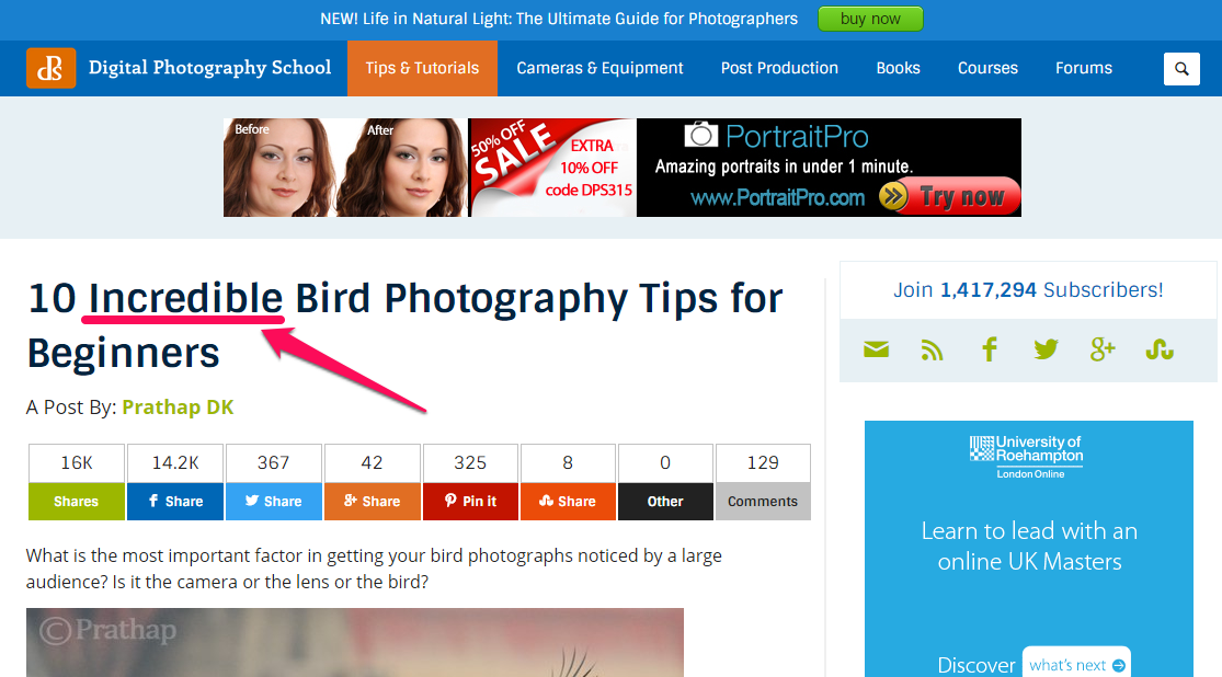 """A screenshot reading """"10 incredibly bird photography tips for beginners"""" as a headline."""